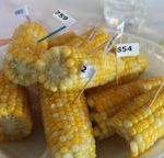 Sweet corn ready for sampling.