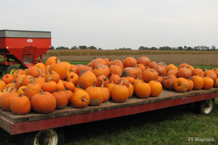 Pumpkins on a trailer.