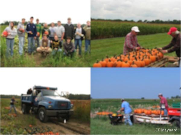 Pumpkin harvesters.
