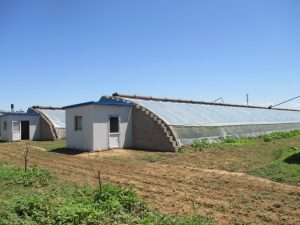 Figure 1. Outside view of Chinese-style solar greenhouses.