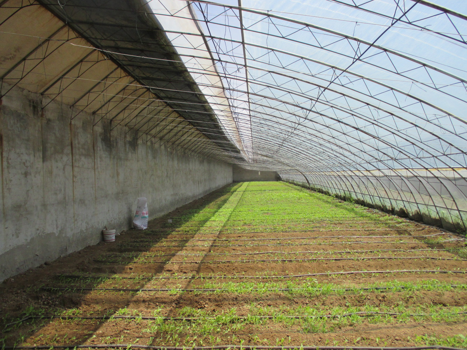 Leafy Vegetables Grown In A Chinese Style Solar Greenhouse