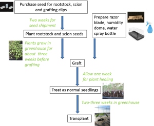 Figure 1. A general timeline and materials needed for producing grafted tomatoes on a small scale on your farm.