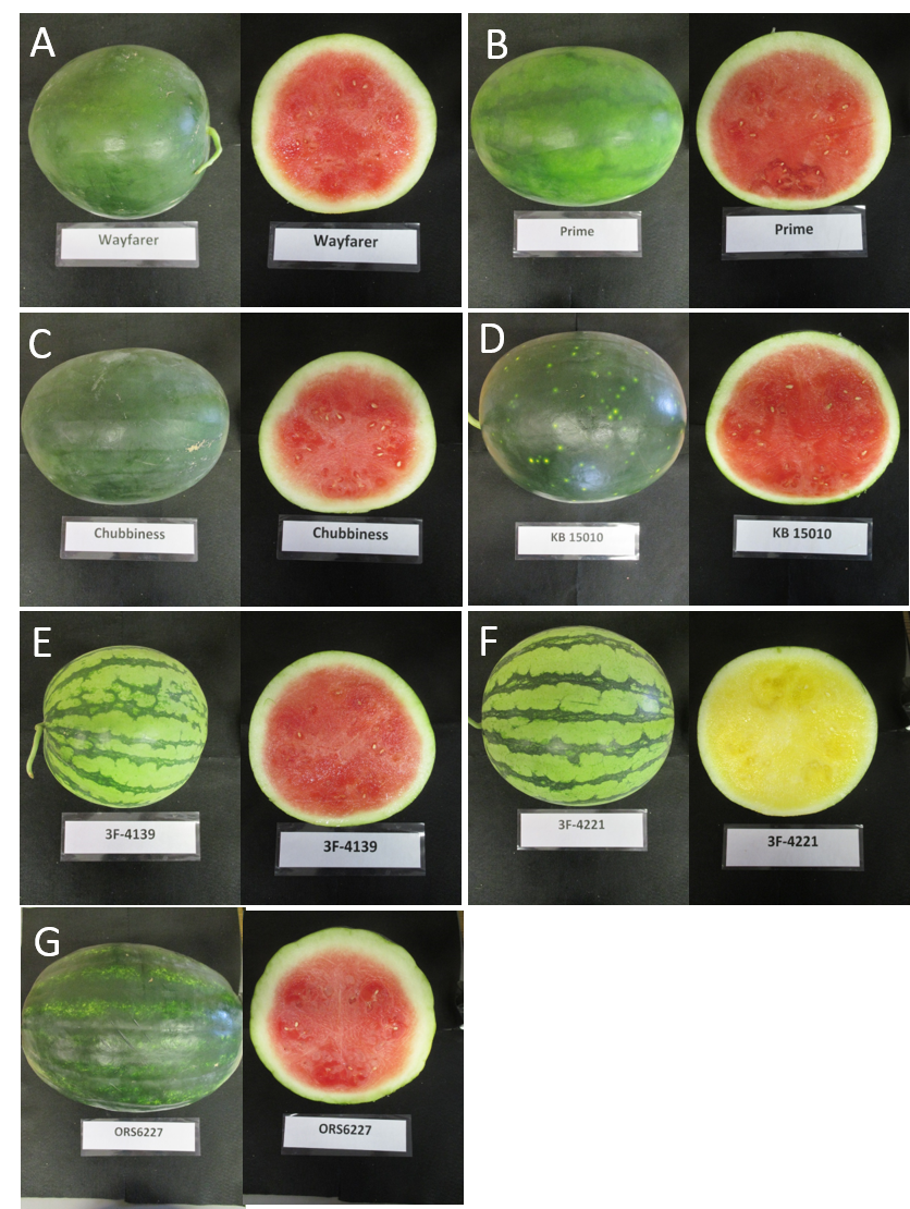 Types Of Watermelon With Pictures