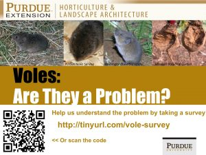 Vole Survey Poster