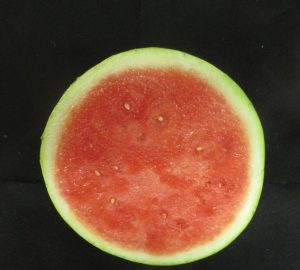 Figure 1. A seedless watermelon