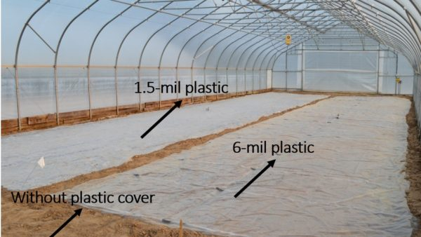 The Update of Soil Solarization in a High Tunnel at SWPAC