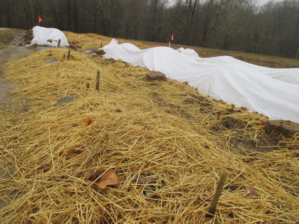 Figure 1. Strawberries were covered with straw mulch and row cover. Picture were taken in Jan. 9 2018.