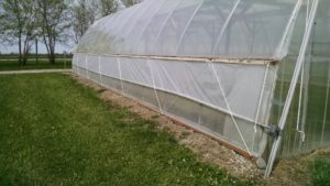 Figure 2. Insect screens installed on a high tunnel.