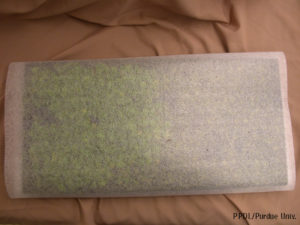 Figure 1. Seedling tray covered in light foam material for shipping.
