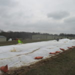 Figure 2. Covering a strawberry field with a row cover.