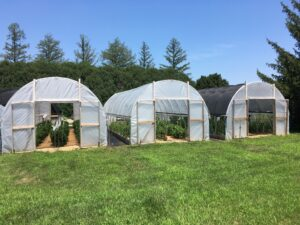 Figure 1. Place shadecloth on high tunnels for colored bell pepper production. Photo credit: Ajay Nair