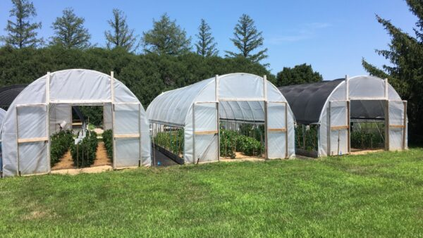 Using Shadecloth on High Tunnels for Tomato and Colored Bell Pepper Production