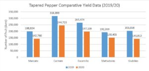 Figure 5. 2019 and 2020 comparative fruit yield (number/acre) of sweet tapered pepper cultivars.