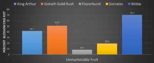 Figure 7. BER of colored sweet bell pepper cultivars showed as a percent of total unmarketable fruit.