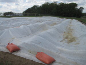 Figure 1. The strawberry field was covered with floating row covers (1.5 oz) for frost protection in spring