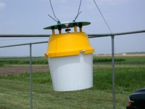 Figure 2. Bucket traps, such as this one, are available to catch the adult Squash Vine Borer. Photo by John Obermeyer.